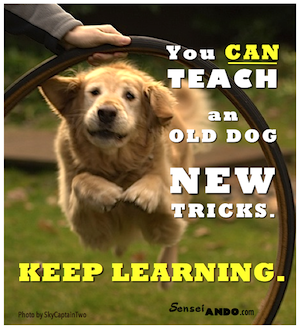 you can't teach an old dog new tricks - Wiktionary